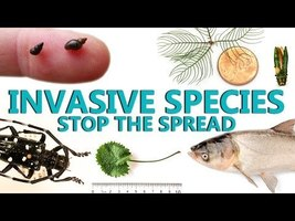 Invasive Species Stop the Spread